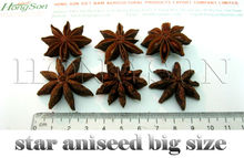 star aniseed big size