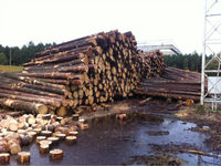 PINE SPRUCE BIRCH LOGS , LITHUANIAN WOOD