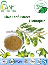 Free Samples Herbal extract Oleuropein 20% by Olive Leaf extract