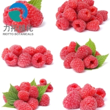 Raspberries,Slimming Product Palmleaf Raspberry Fruit P.E. ;Raspberry Ketone