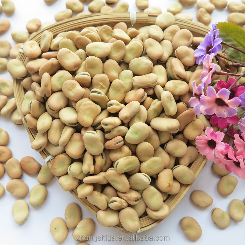 Dried Broad Beans Bulk Dry Fava Beans Top Quality