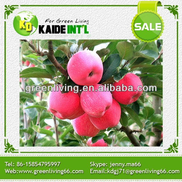 China red star apple supplier(72#,80#,88#,100#,113#,125#,138#,150#,163#,175#,198#)