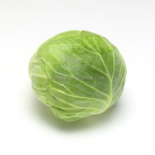 Fresh Cabbage High Quality For Sale All Over The World