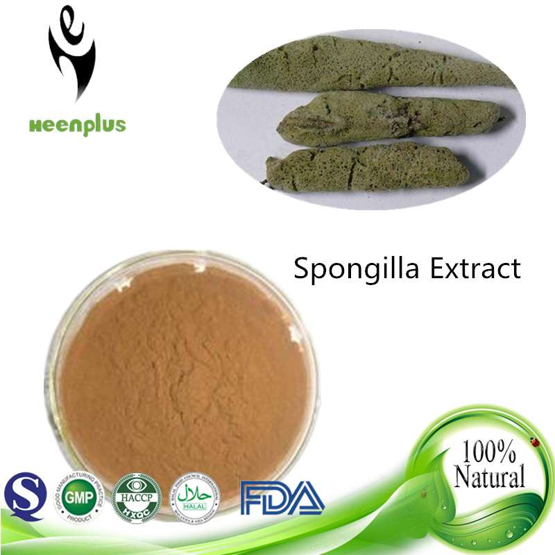 Male Enhancement Plant Extract Spongilla Extract