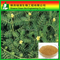 Manufacture Supply 100% Pure Natural Tribulus Terrestris Extract Saponins In Bulk/Tribulus Terrestris Extract Wholesale