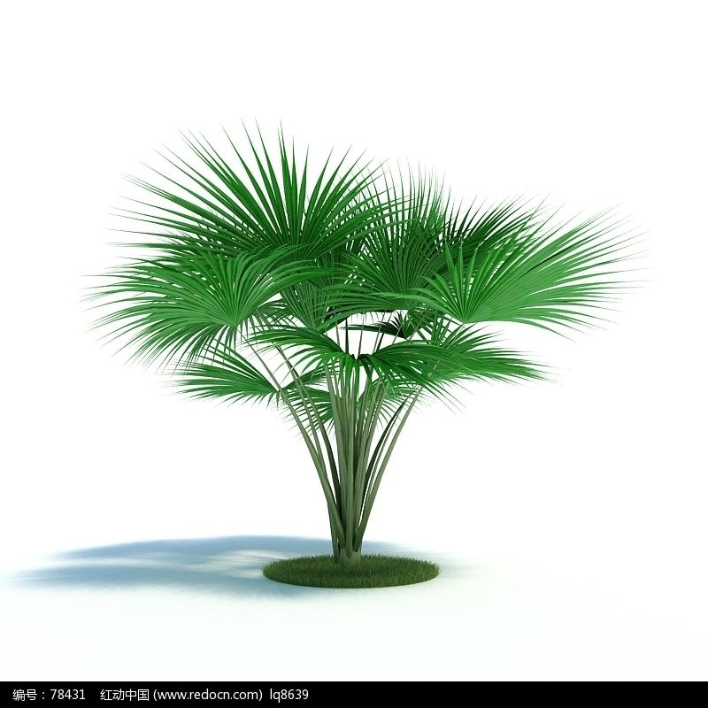 3dmax树素材