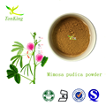 Top quality mimosa pudica powder