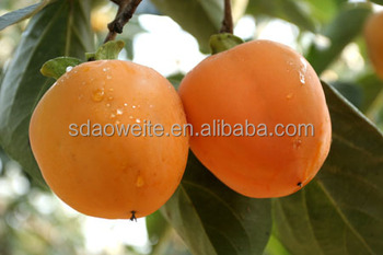 Ethylene Ripener for Persimmon
