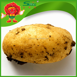 2016 fresh potatoes pollution free planting potatoes for sale