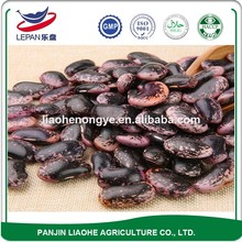 Wholesale Big Ethiopian Red Round Kidney Spotted Sugar Beans