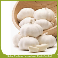 High quality pure fresh natural white garlic