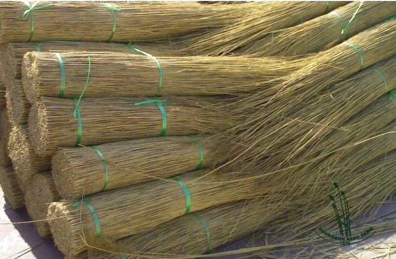 Thatched Reed Roofing Reed   Buy Thatched Reed,Water Reed For Roof  Thatching,Thatched Roof Reed Product On Alibaba.com