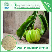 2017 HOT selling Garcinia Combogia Extract Hydroxy Citric acid HCA 40% 50% 60% 70% by HPLC