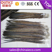 Top quality pheasant tail feather decorative feathers for hats