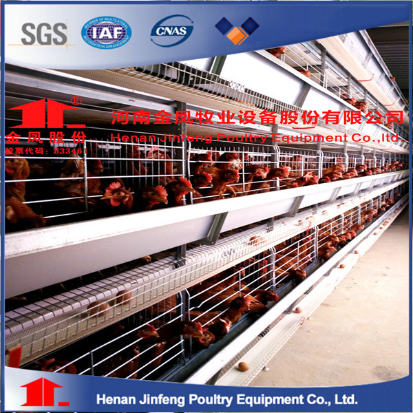 Automatic poultry farm design layout high quality chicken battery cage for layer chicken sheds
