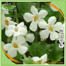 Factory supplying Natural Bacopa Monnieri extract Bacopasides 50%