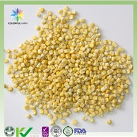 Freeze dried corn FD sweet corn of freeze dried food for healthy snacks