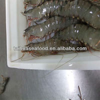 best quality fresh raw frozen headless black tiger prawns