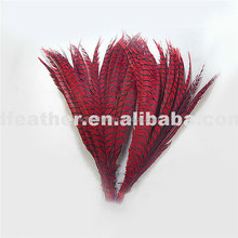 factory selling top quality dyed lady amherst pheasant tail feathers for sale