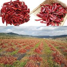 Best Selling Quality red chilli pirce China manufacturer