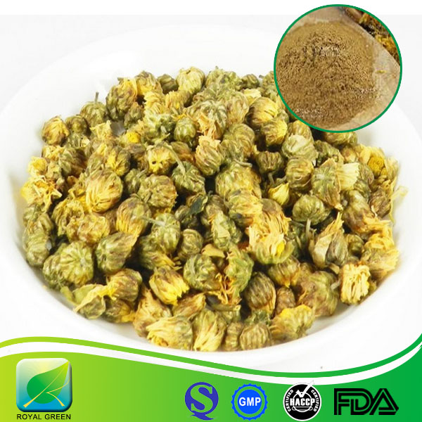 Raw material wild chrysanthemum flower extract from Hubei Yichang