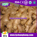 China Fresh Ginger/Air Dried Ginger For UK,CANADA,USA and EU Market