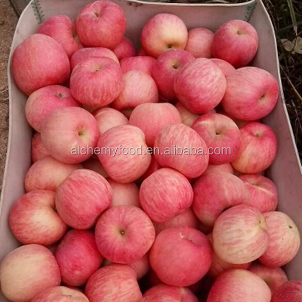 China Fresh Apple and Fresh Apple Fruit Packaging