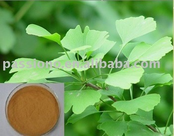 100% Natural Extract Ginkgo Biloba Extract 24/6 in stock