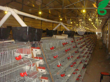 quail cages and equipment for poultry farm