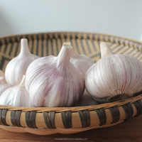 China supplier Natural normal white fresh garlic price