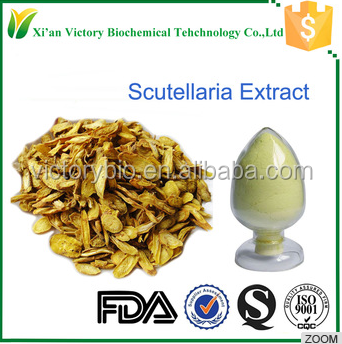 baicalin powder scutellaria baicalensis root extract