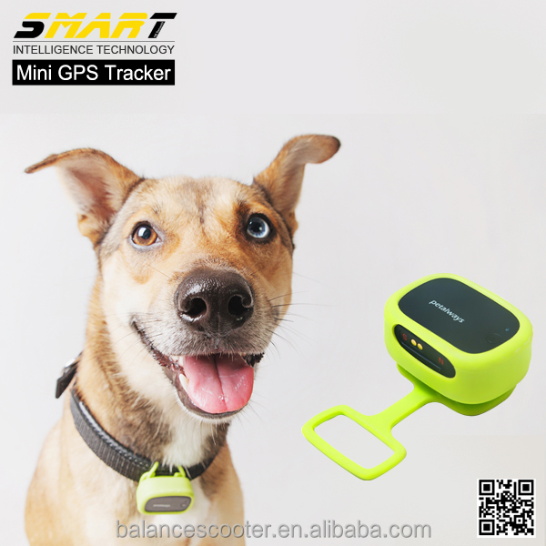 Wholesale creative dog health monitor pet collar gps tracker for dogs