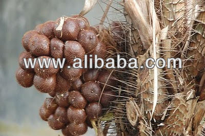 Salak / Snake Fruit