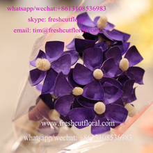 Cheap Dried Jasmine Flowers For Sale Look For Retailer