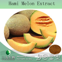 Hot sale Hami melon extract ,Cantaloupe extract,