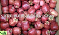 red delicious apple new crop