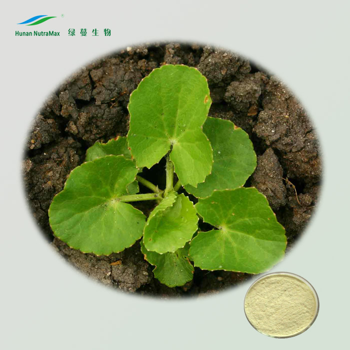 100% Pure Gotu Kola P.E. with low price Total Triterpenes(HPLC 70% -95%)