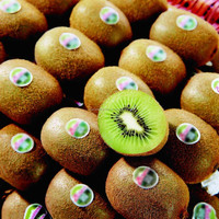 Grapes / Kiwi fruit / Mango/ Fresh fruit Import and Export Agency in Shanghai