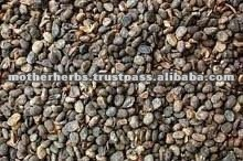 Suppliers of Psoralea seed