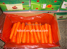 2016 new crop Fresh vegetable fresh carrot