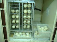 SABIRS INCUBATORS HATCHERIES FARMS MANUFACTURER
