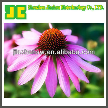 natural Echinacea extract powder Choric acid 2%,4%