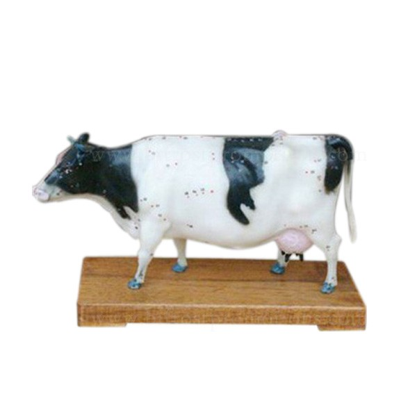 Vivid Education Animal Anatomical Plastic Model Cow