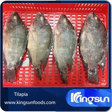 Farm Raised Frozen Tilapia Gutted