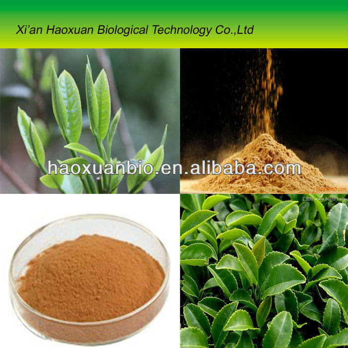 Green Tea Extract/Tea Polyphenol 98%