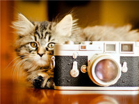 High definition cute cat with camera 3d cat photography