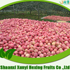 factory directly supply high quality fuji apple