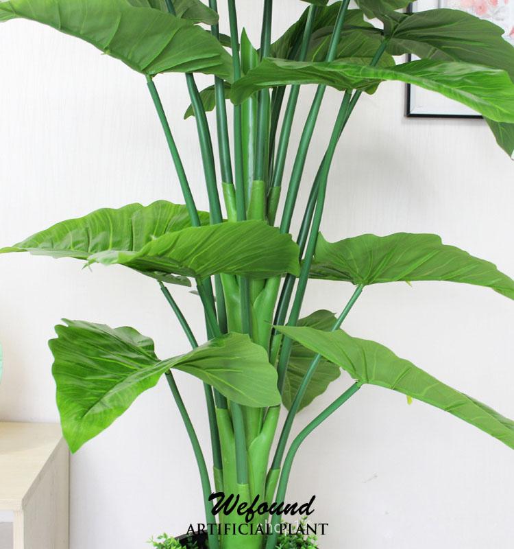 Grossiste plantes et arbres acheter les meilleurs plantes for Vente plante verte