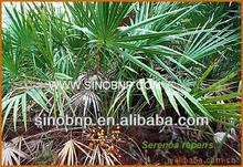 Qingdao BNP -High Quality Saw Palmetto Extract/saw palmetto berry extract powder