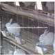 industrial breeding rabbit cage 3 or 4 layer